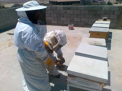 تقسيم طوائف النحل