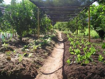 الحديقة المنزلية الخضراء في ظل جائحتي الاحتلال والكورونا
