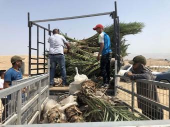 ضمن رسالته التنموية، مركز معاً ينتهي من زراعة 806 شجرة نخيل في قرية العوجا وأربعة مدارس في الأغوار..